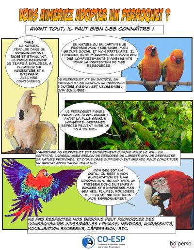 Affiche - Perroquet